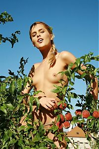 Nake.Me search results: young blonde girl with french braid hairstyle strips her top and reveals her tanned body in the back garden with nectarine trees