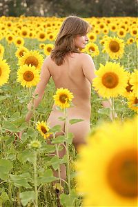 Nake.Me search results: young dark blonde girl posing naked on the field of sunflowers
