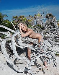 Nake.Me search results: young blonde girl reveals on the sandy beach with a driftwood and remains of trees