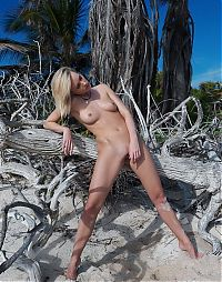 Babes: young blonde girl reveals on the sandy beach with a driftwood and remains of trees